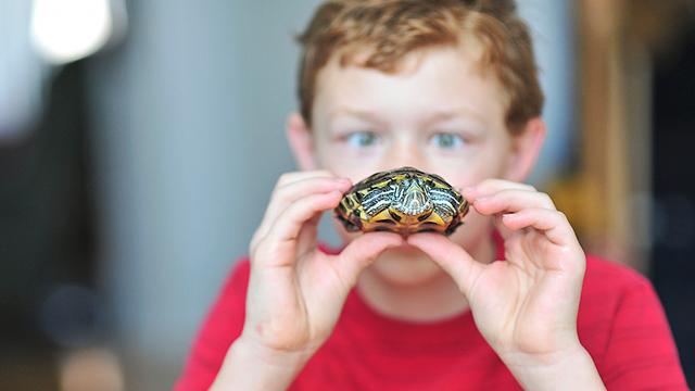 austin turtle